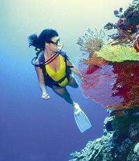 Diving is the activity of choice in Fernando de Naronha, Brazil
